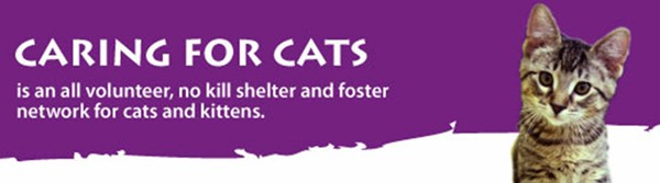 Caring for Cats No Kill Shelter, North St Paul Minnesota
